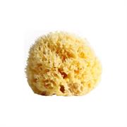 Губка для тела Honeycomb отбеленная 7,5-8,7 см