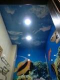 Натяжной потолок Бельгия 5,0;4,0,Небо цветной